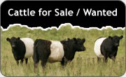 Cattle for Sale and Wanted