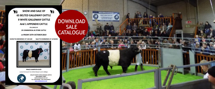 Belted Galloway Sale
